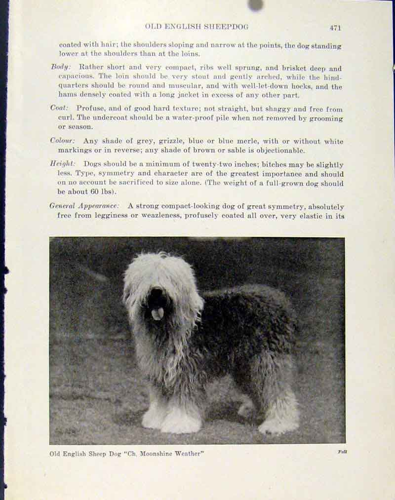 Print Dog English Sheep Dog Fine Art Photograph 137101 Old Original