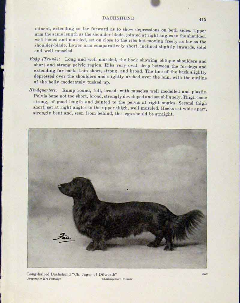 Print Long Haired Dachshund Fine Art Dog Hound Pet 247101 Old Original