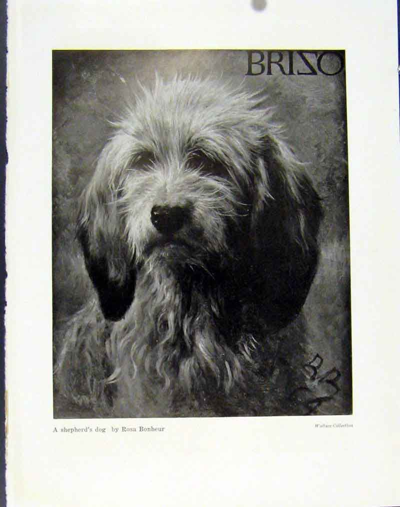 Print Sportsmans Dog Game Keepers Shepherds Hound Photo 56R7101 Old Original