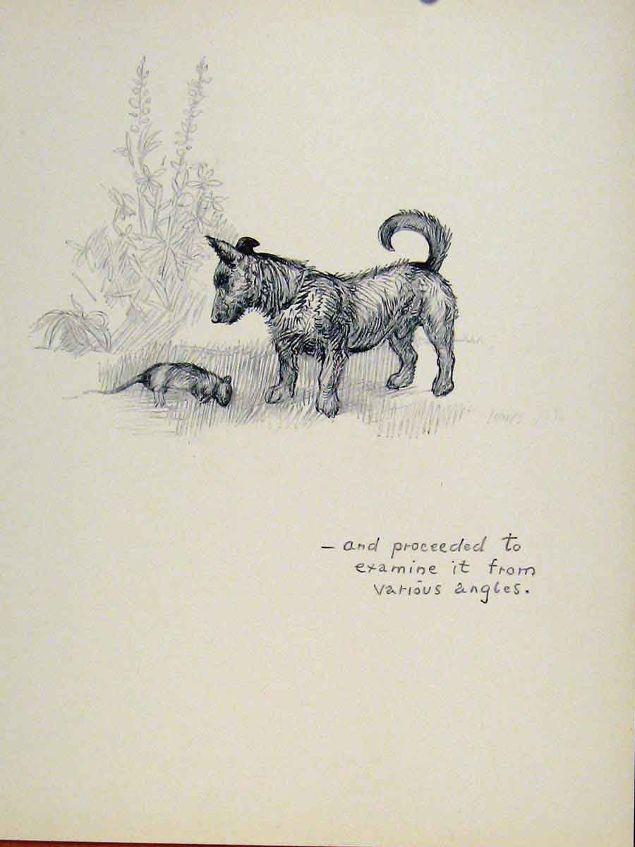Print Dog Hound Examination Pet Animal Sketch C1938 417131 Old Original