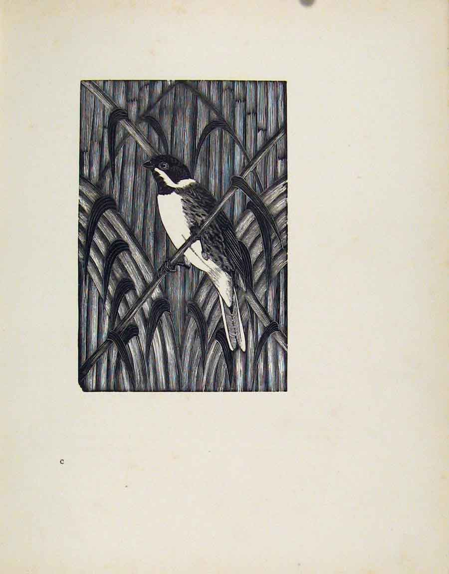 Print Reed Bunting Limited Edition Description Artist 047211 Old Original