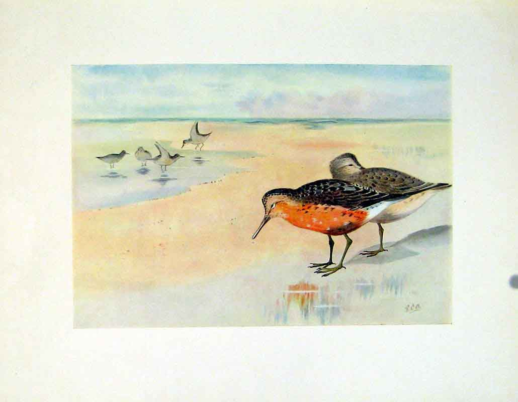 Print Color Art Fine C1924 Knot Bird Lake 477241 Old Original