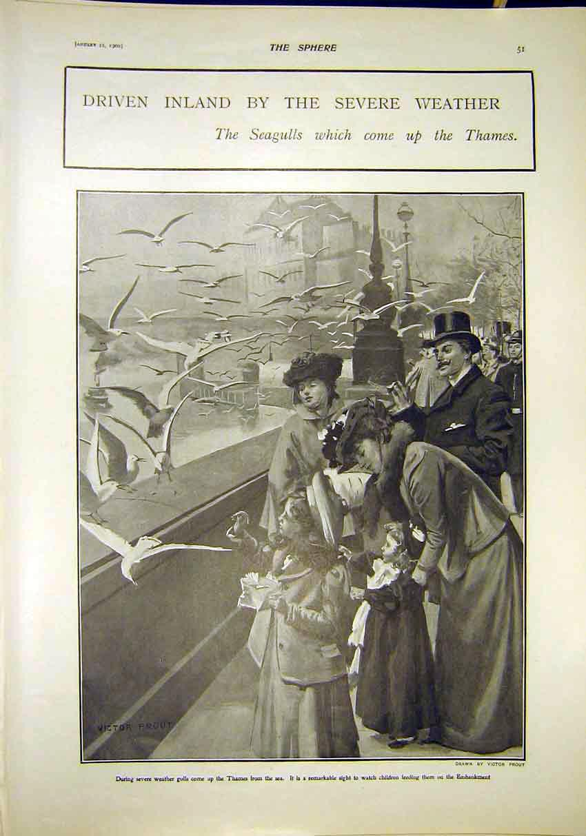 Print Seagulls Thames River Severe Weather London 1902 517311 Old Original