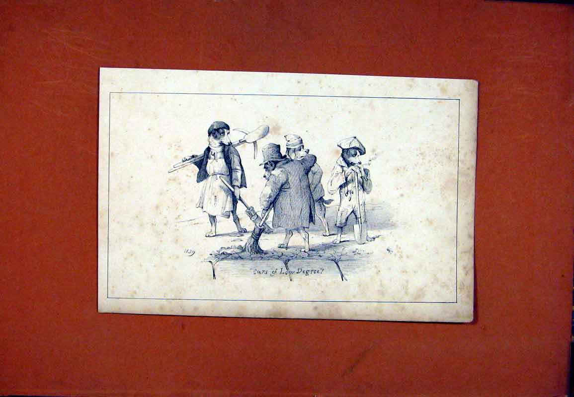 Print Dog Hound Pet Animal C1831 Sketch 127471 Old Original