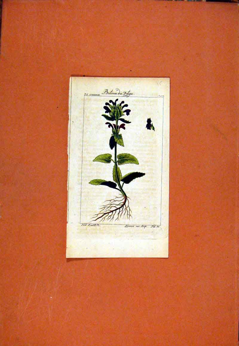 Print Berlin 1786 Botanical Hand Colored Fbetonie Die Fotige 107471 Old Original
