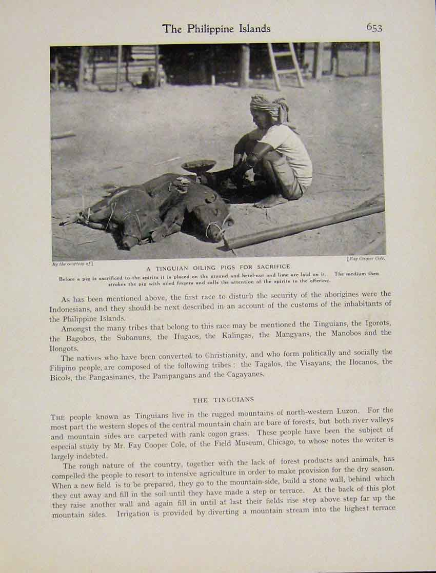 Print Titguian Oiling Pigs Sacrifice Luzon Photo 6537531 Old Original