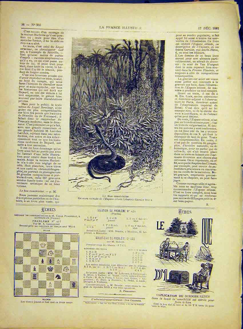 Print Snake Boa-Constrictor Reptile French 1882 367630 Old Original