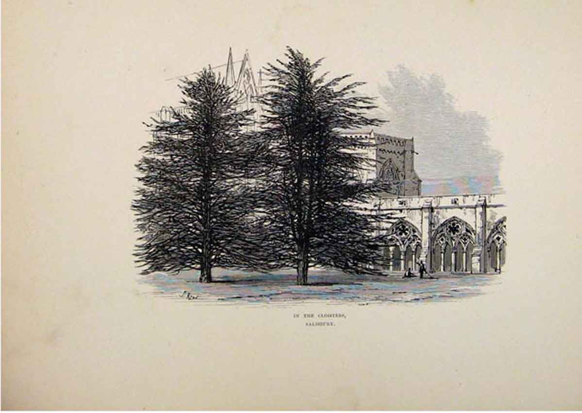 Print In The Cloisters Saisbury England 1875 Sketch 297661 Old Original
