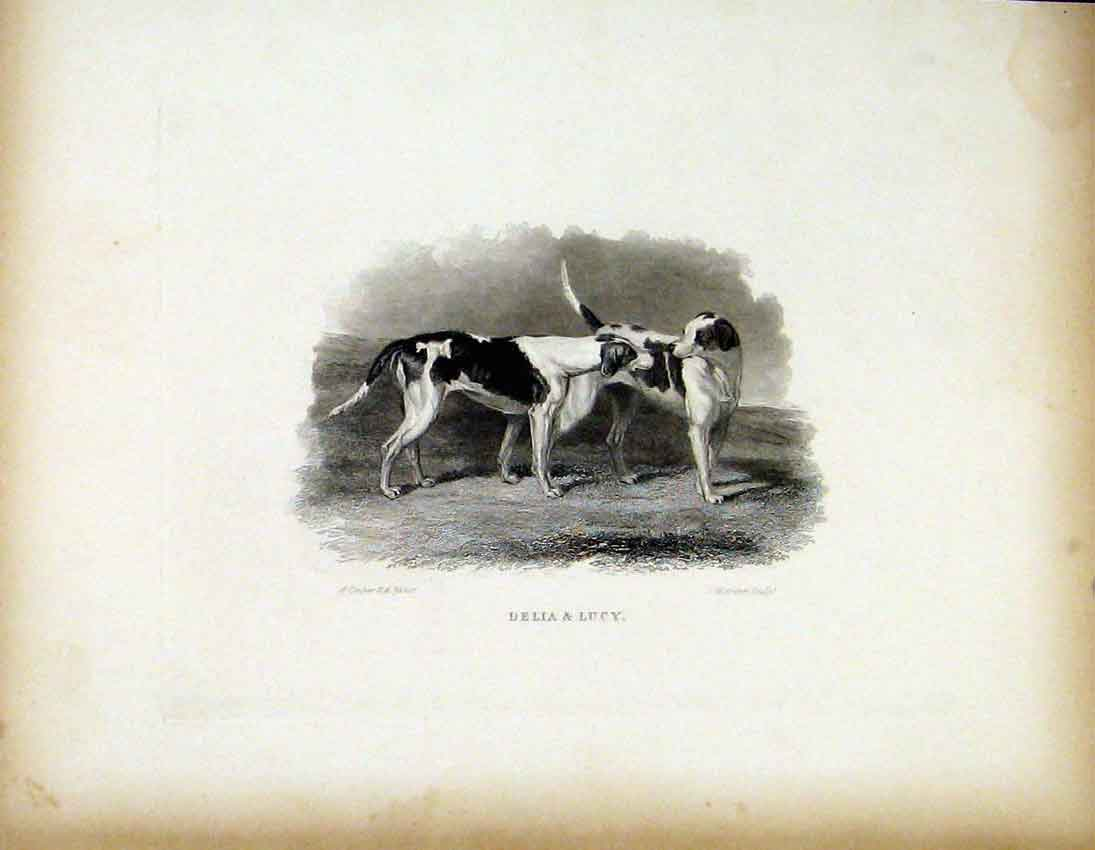 Print Belia Lucy C1843 Two Friendly Dogs 537691 Old Original