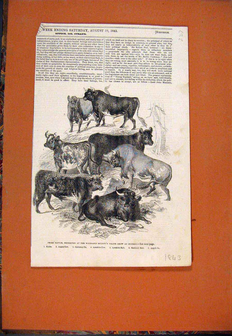 Print Cattle Highland Society Show Dundee Scotland 1843 277761 Old Original