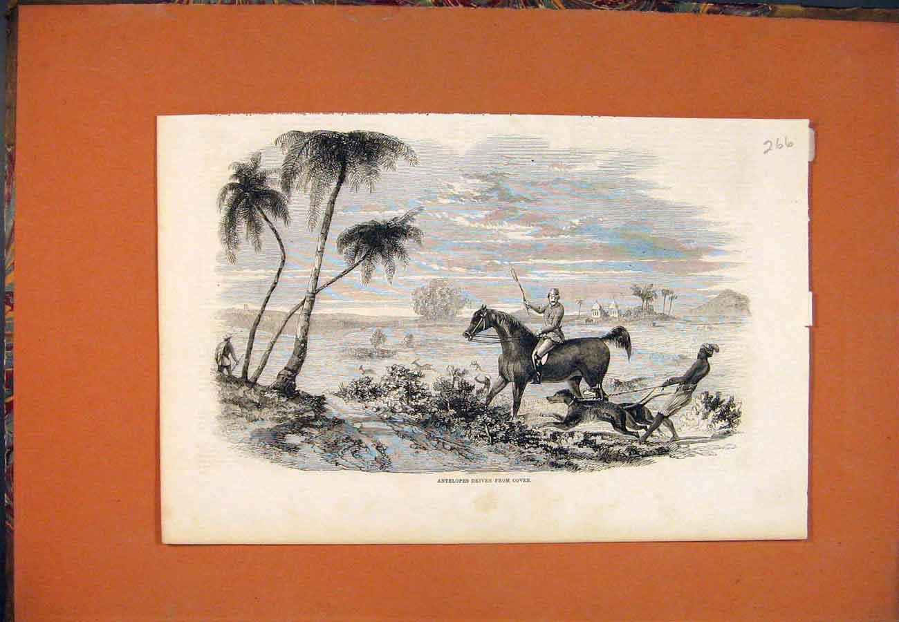 Print Antelopes Hunting Dogs Horse 667761 Old Original