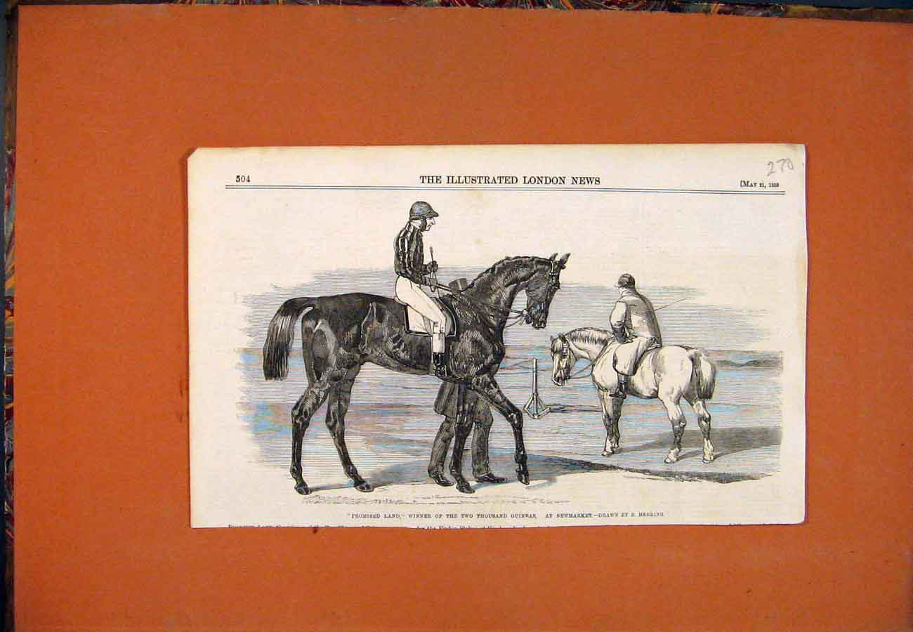 Print Promised Land Racehorse Newmarket Herring 1859 707761 Old Original