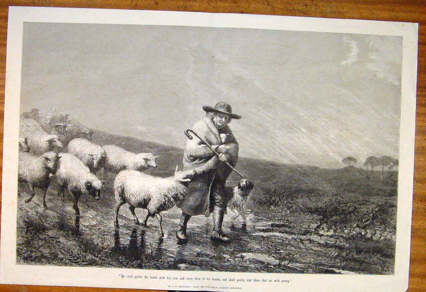 Print Bottomley Shepherd Sheep Dog Royal Academy Fine Art 357761 Old Original
