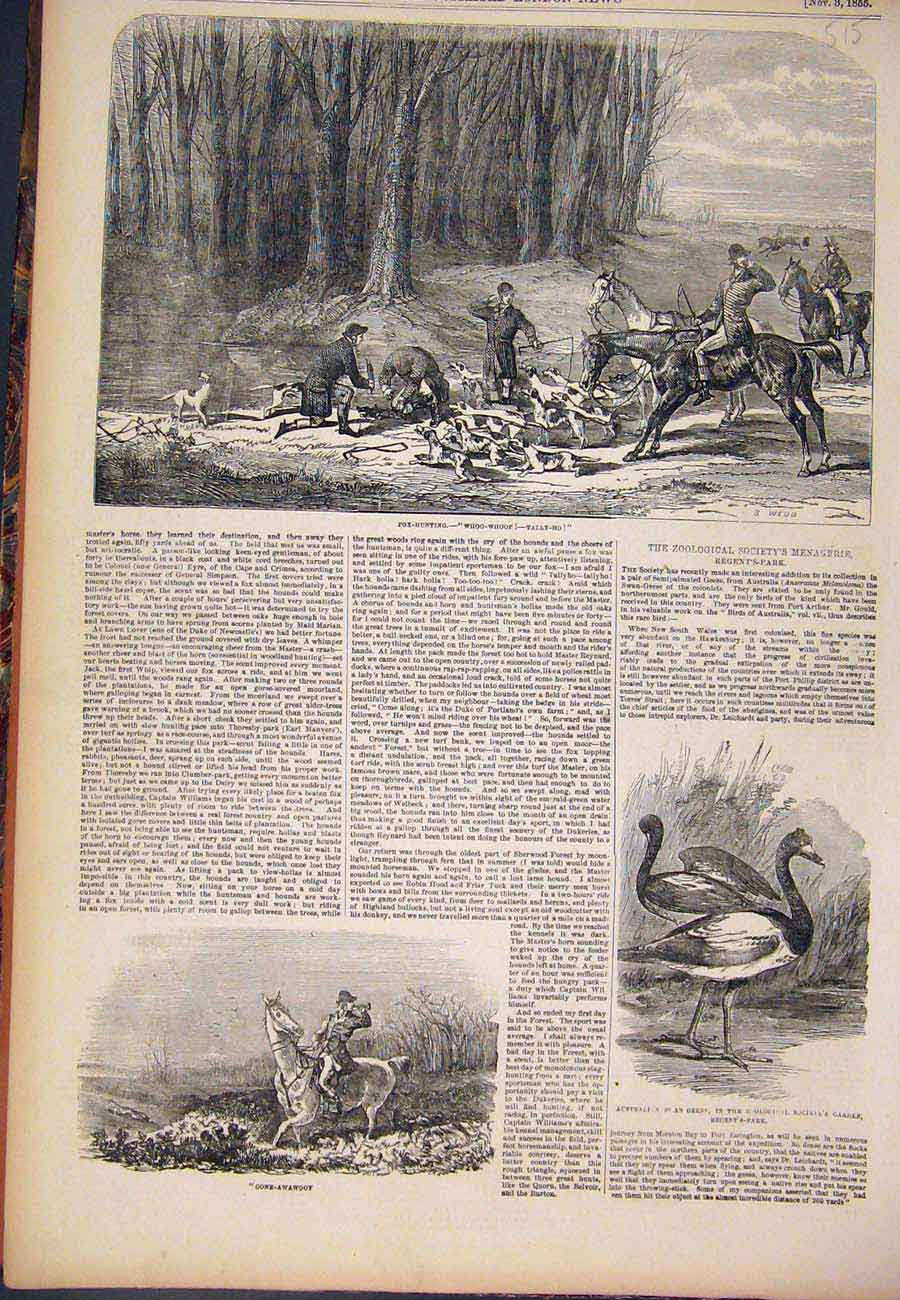 [Print 1855 Fox Hunting Tally-Ho Hounds Hunt Swan Geese 157761 Old Original]