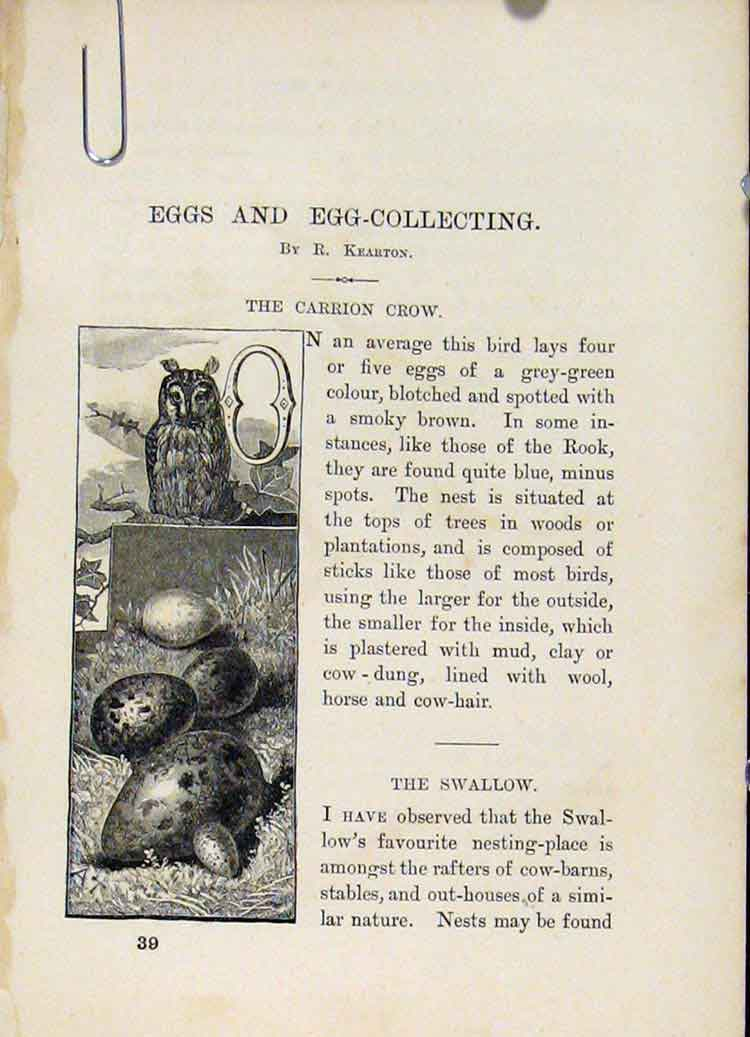 Print Wild Birds C1883 16Pgs Bird Eggs Collection 017851 Old Original