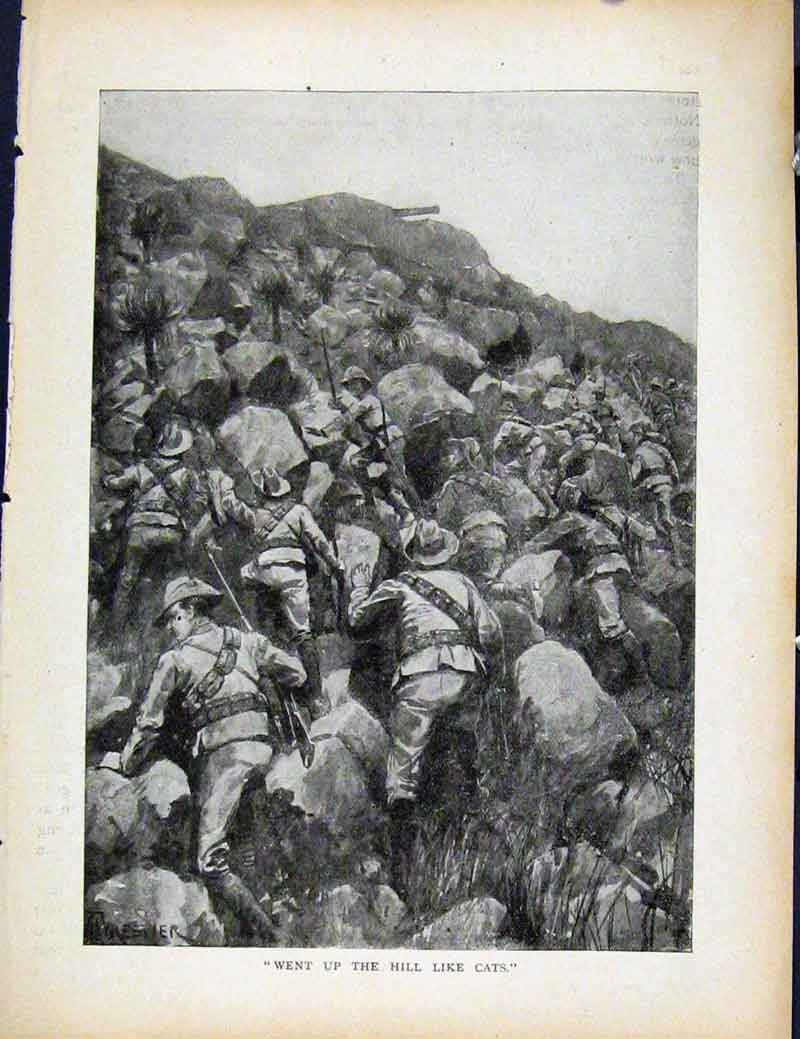 Print Boer War By Richard Danes Went Up Hill Like Cats 467871 Old Original