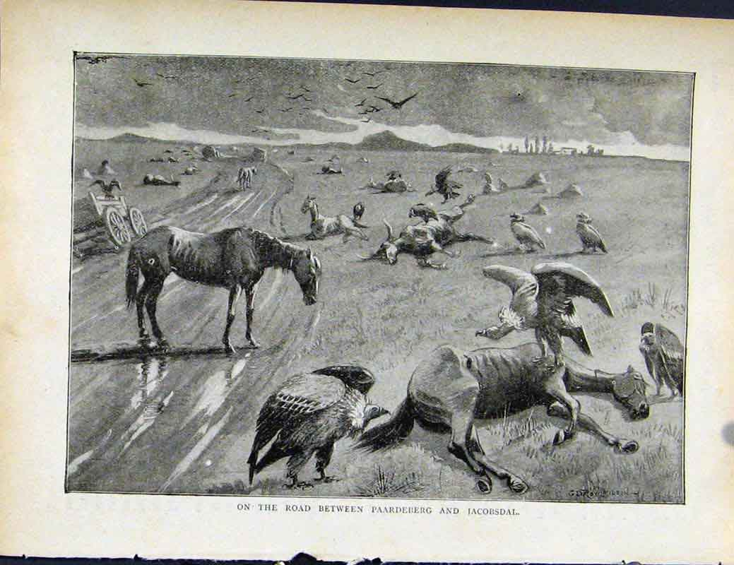 Print Boer War Richard Danes Road Between Paardeberg Jacobdal 637871 Old Original