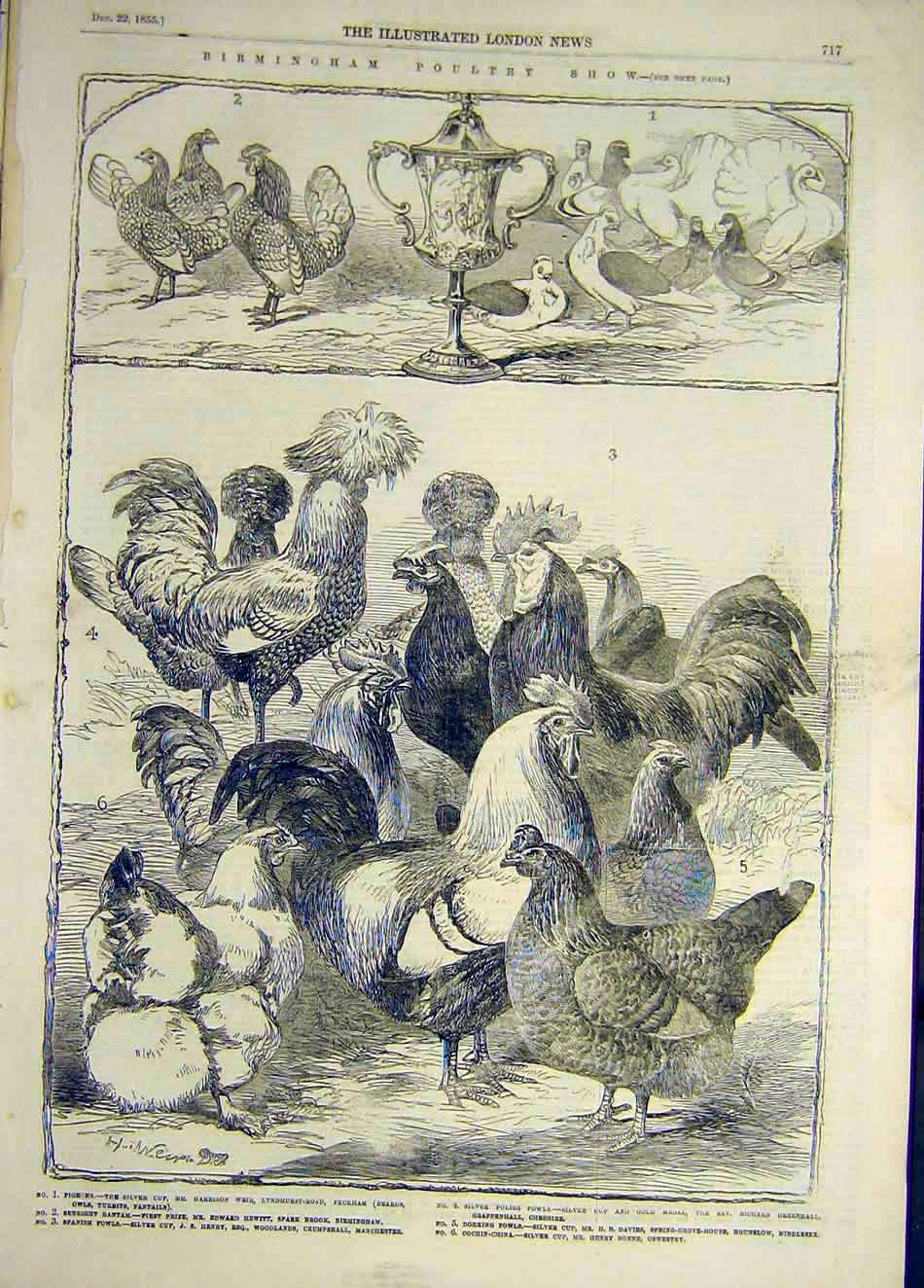 [Print 1855 Birmingham Poultry Show Cup Pigeons Chicken Duck 847921 Old Original]
