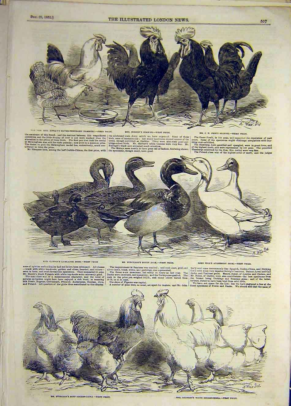Print 1852 Chickens Birds Poultry Duck Cohin-China Animals 957921 Old Original