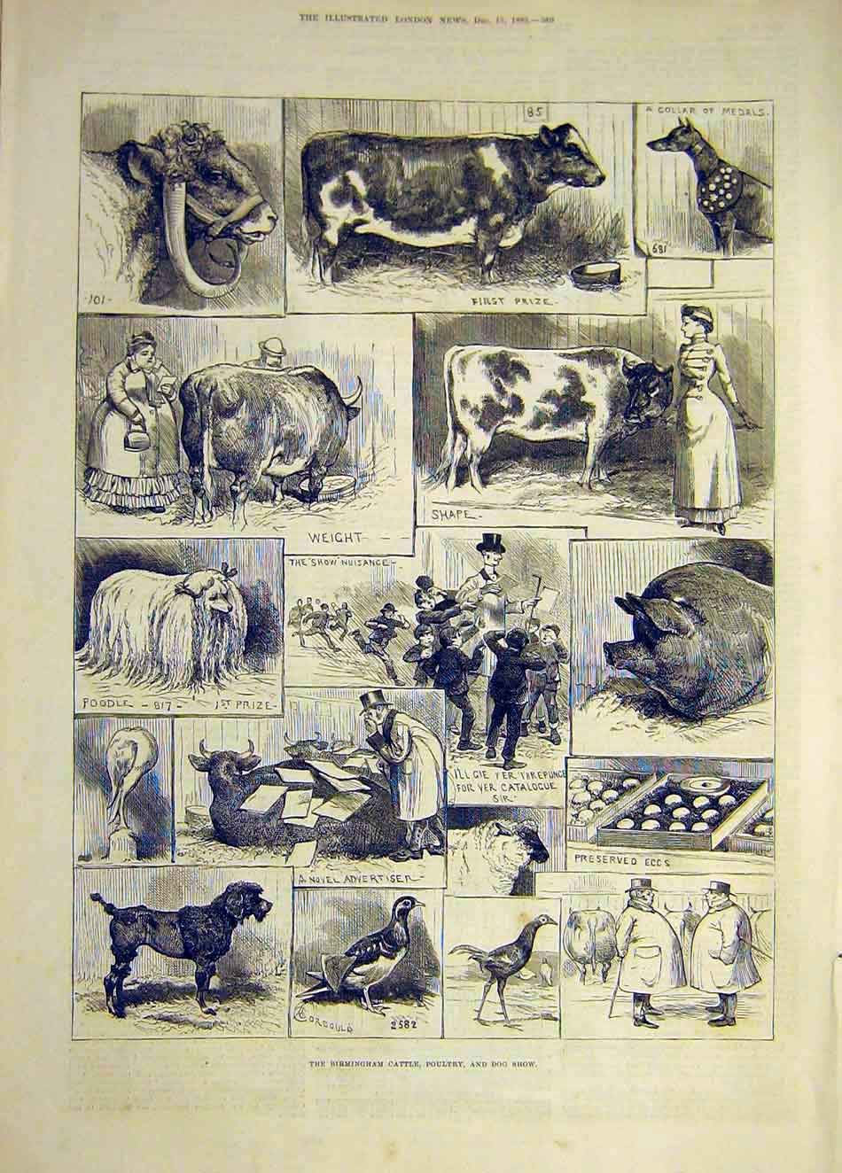 [Print 1883 Birmingham Cattle Poultry Dog Show Animals 147921 Old Original]