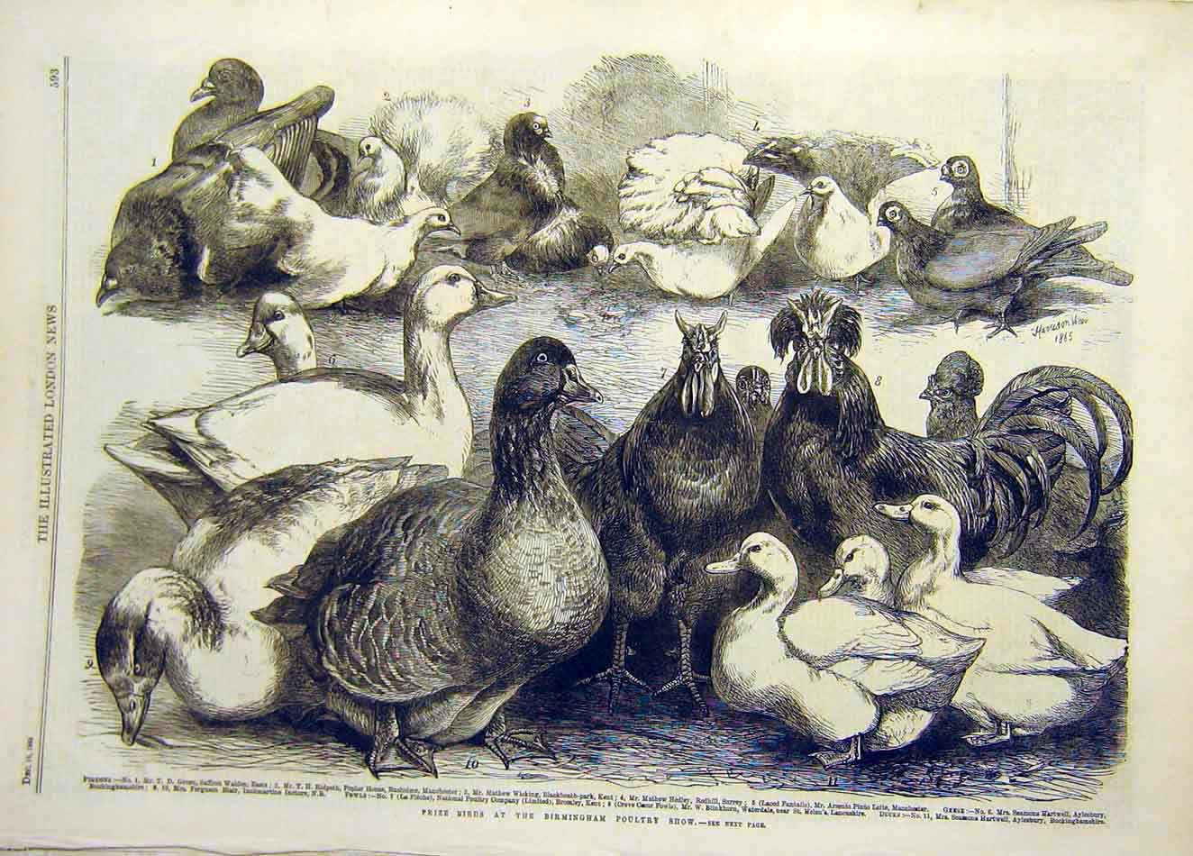 Print 1865 Prize Birds Birmingham Poultry Show Ducks Chicken 247921 Old Original