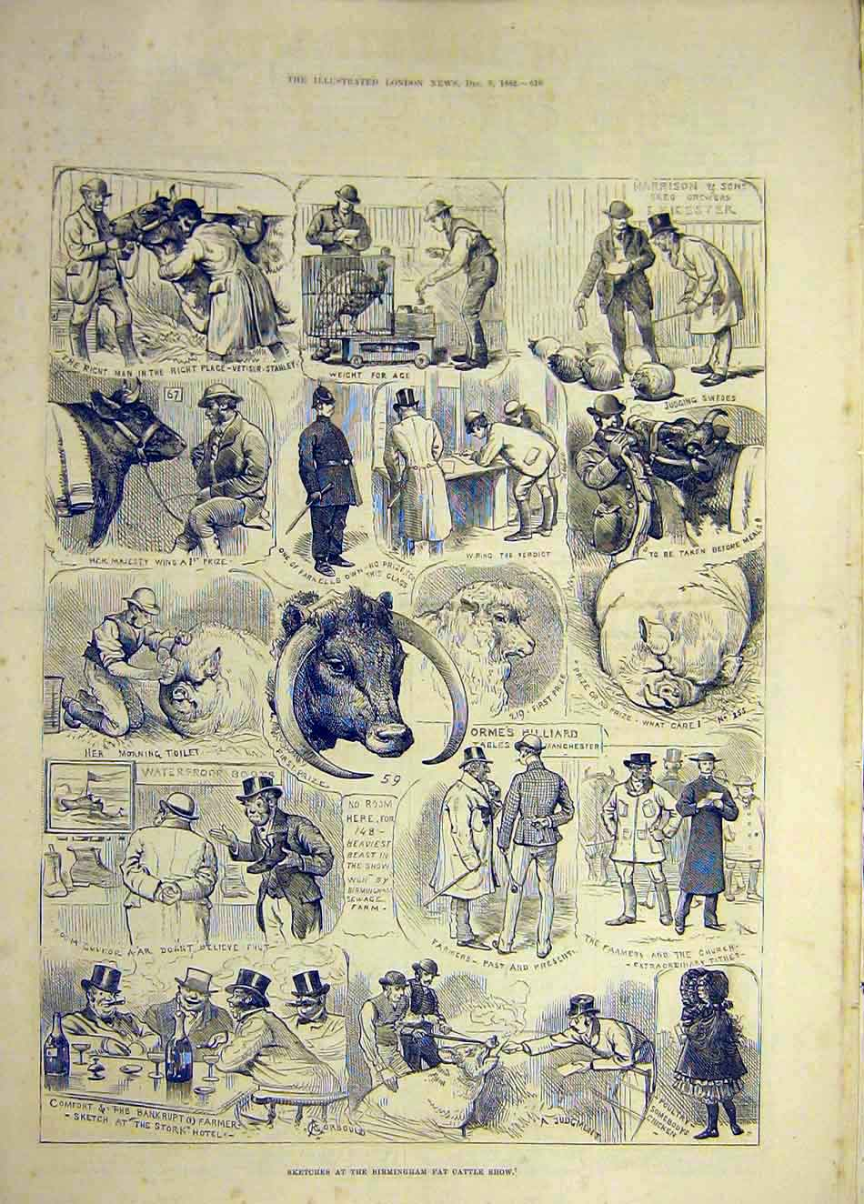 Print 1882 Birmingham Fat-Cattle Show Sketches Animal 857921 Old Original