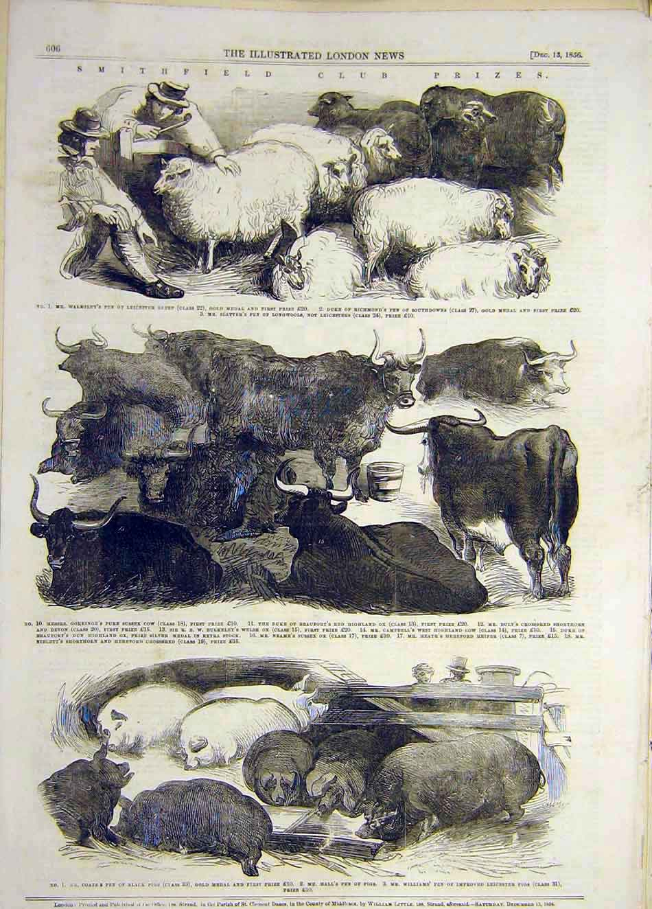 Print 1856 Smithfield Club Prizes Animals Pigs Cattle Sheep 867921 Old Original