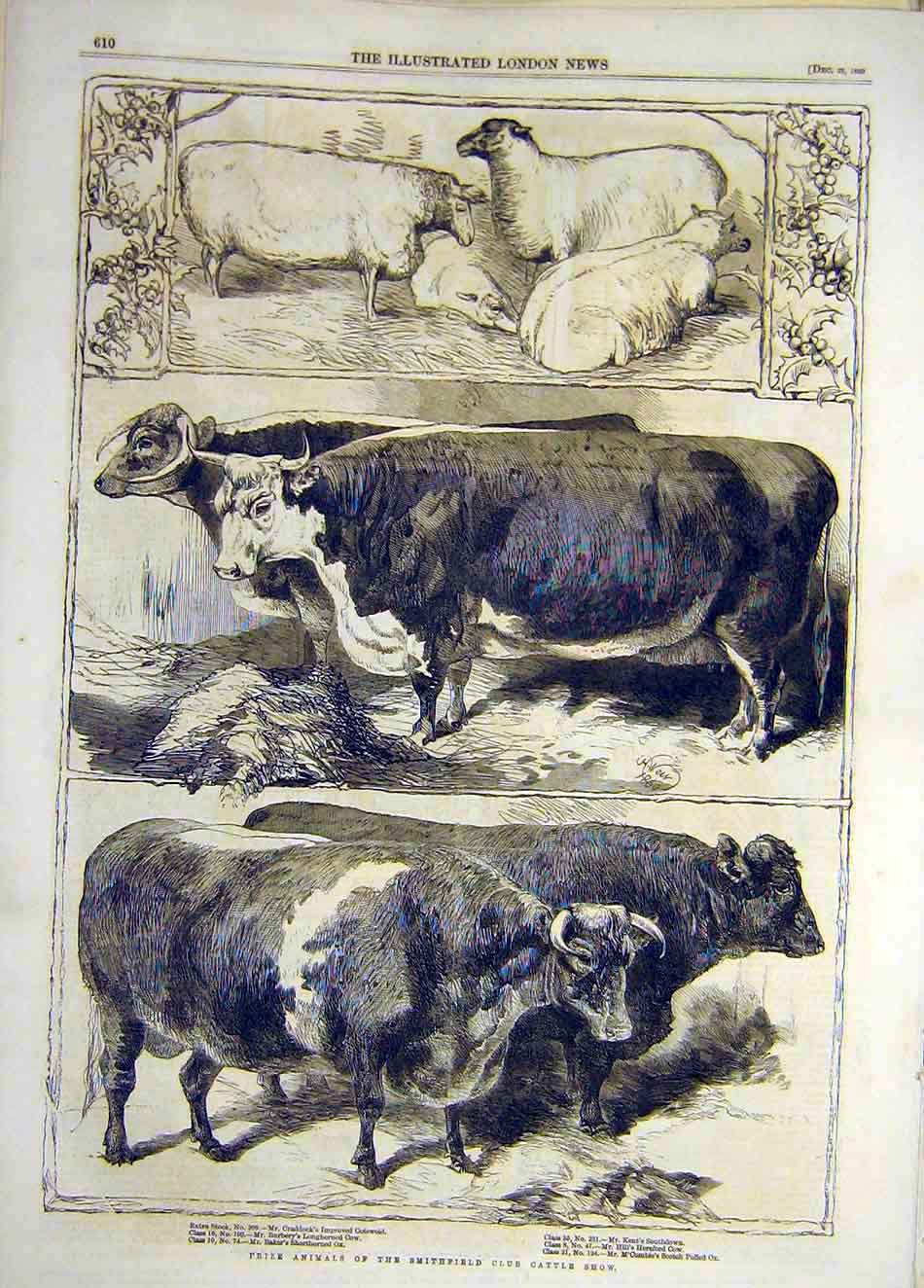 Print 1860 Prize Animals Smithfield Cattle Show Sheep 877921 Old Original