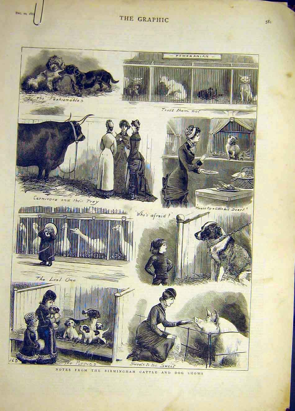 [Print 1881 Birmingham Cattle Dog Show Sketches Animal 087921 Old Original]