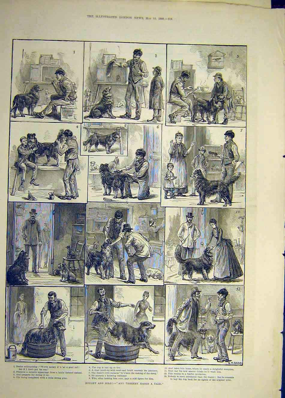Print 1888 Sketches Dadd Dog Pet-Shop Pound SAnimal Tail 107921 Old Original