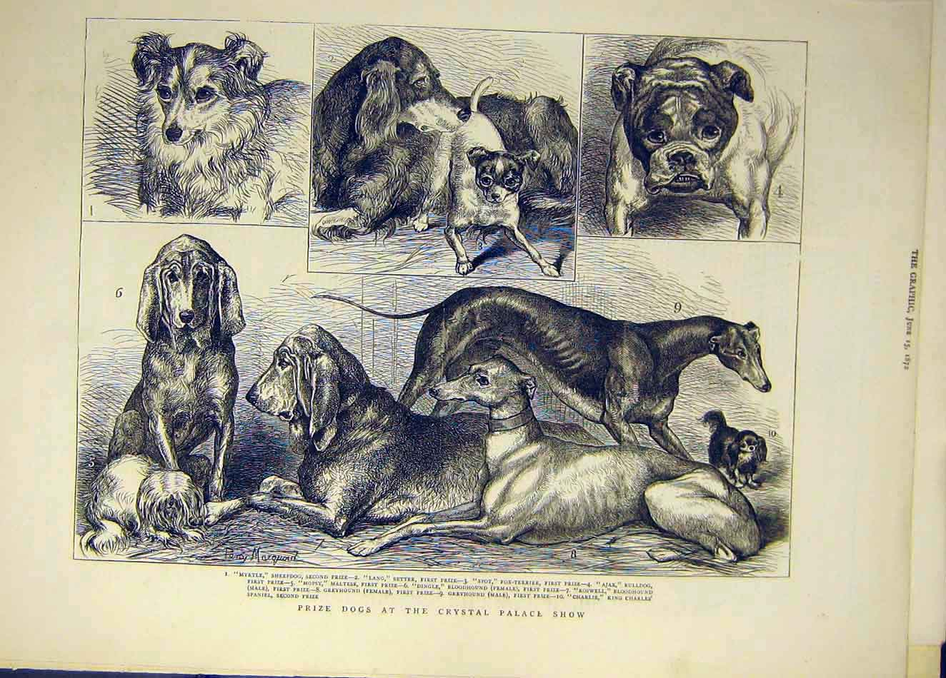 Print 1865 Dog Show Islington Dogs People Animal 137921 Old Original