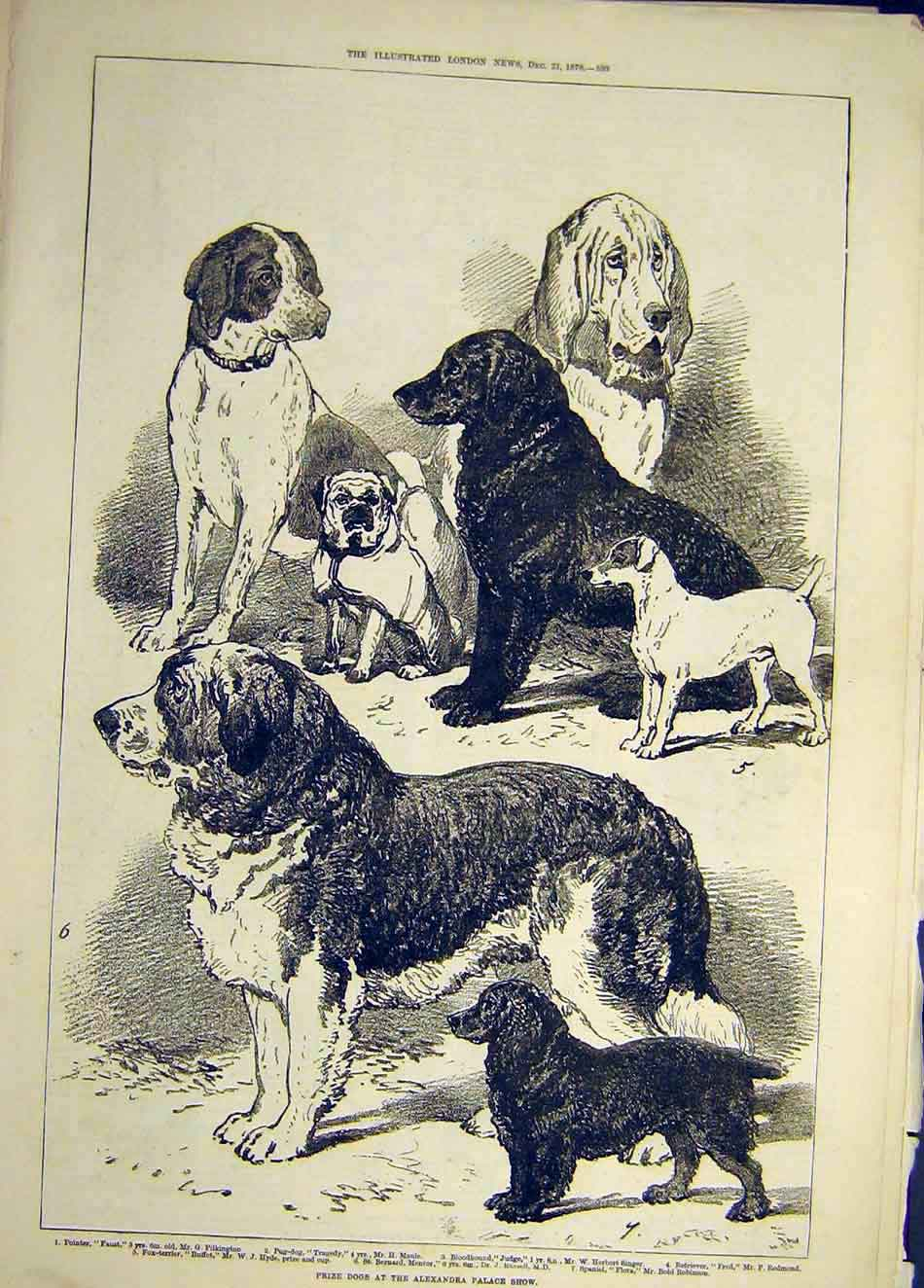 Print 1878 Prize Dogs Alexander Palace Show Animal 177921 Old Original