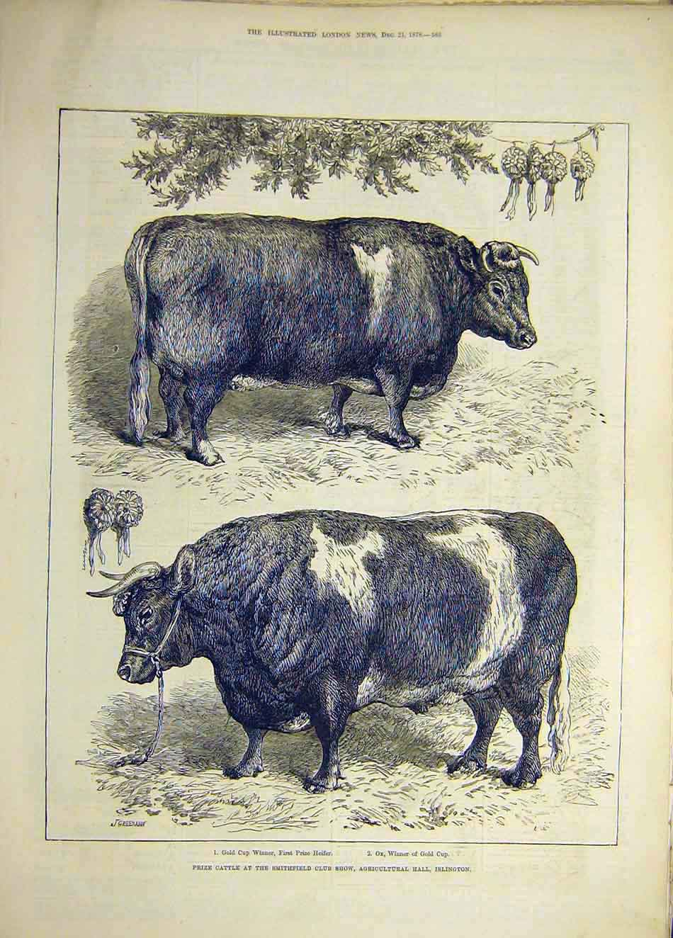 Print 1878 Prize Cattle Smithfield Show Islington Animal 417921 Old Original