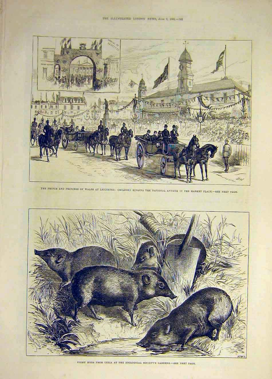 Print 1882 Leicester Prince Princess Wales Children Pigmy Hog 347931 Old Original