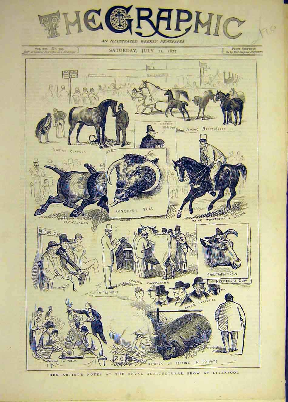 Print 1877 Royal Agricultural Show Liverpool Sketches Animal 707931 Old Original