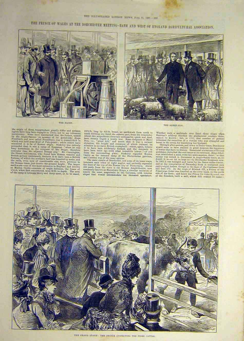 Print 1887 Dorchester Prince Wales Dairy Sheep-Pen Cttle 277941 Old Original