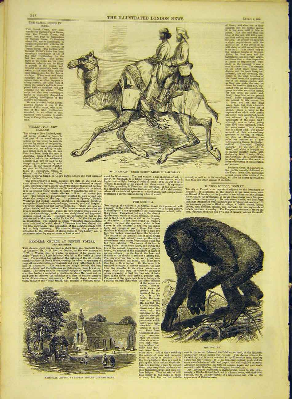 Print 1859 Barras Camel Corps Church Denbighshire Gorilla 757991 Old Original