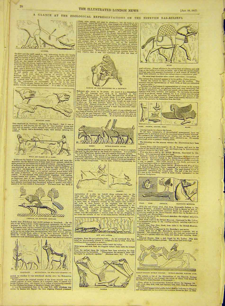 Print 1857 Nineveh Bas-Relief Animals Zoological 417991 Old Original