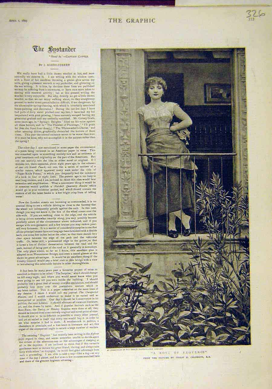 Print 1893 Rose Provence French Portrait Lady Calderon 268011 Old Original