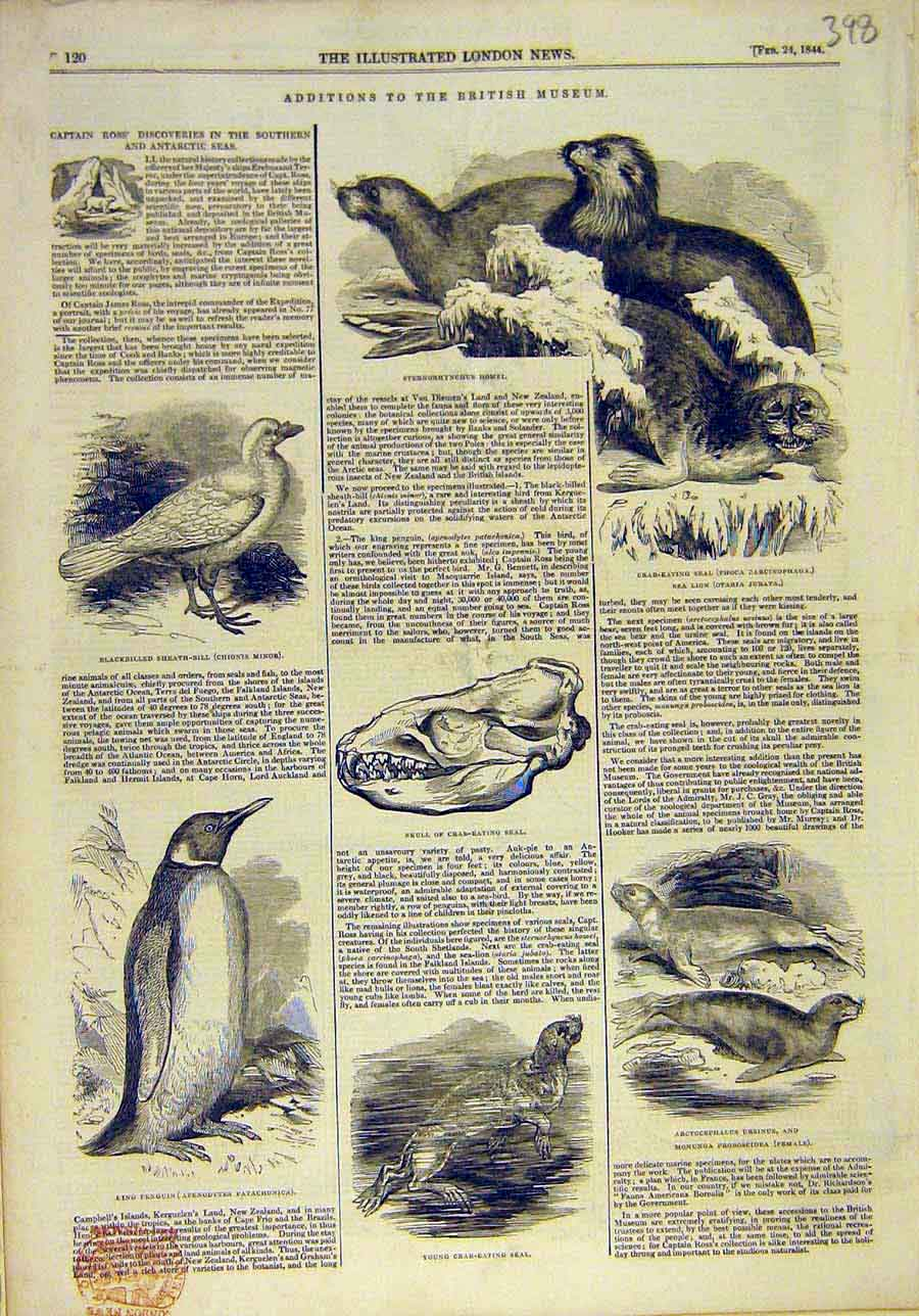 Print 1844 British Museum Animals Natural History 988011 Old Original