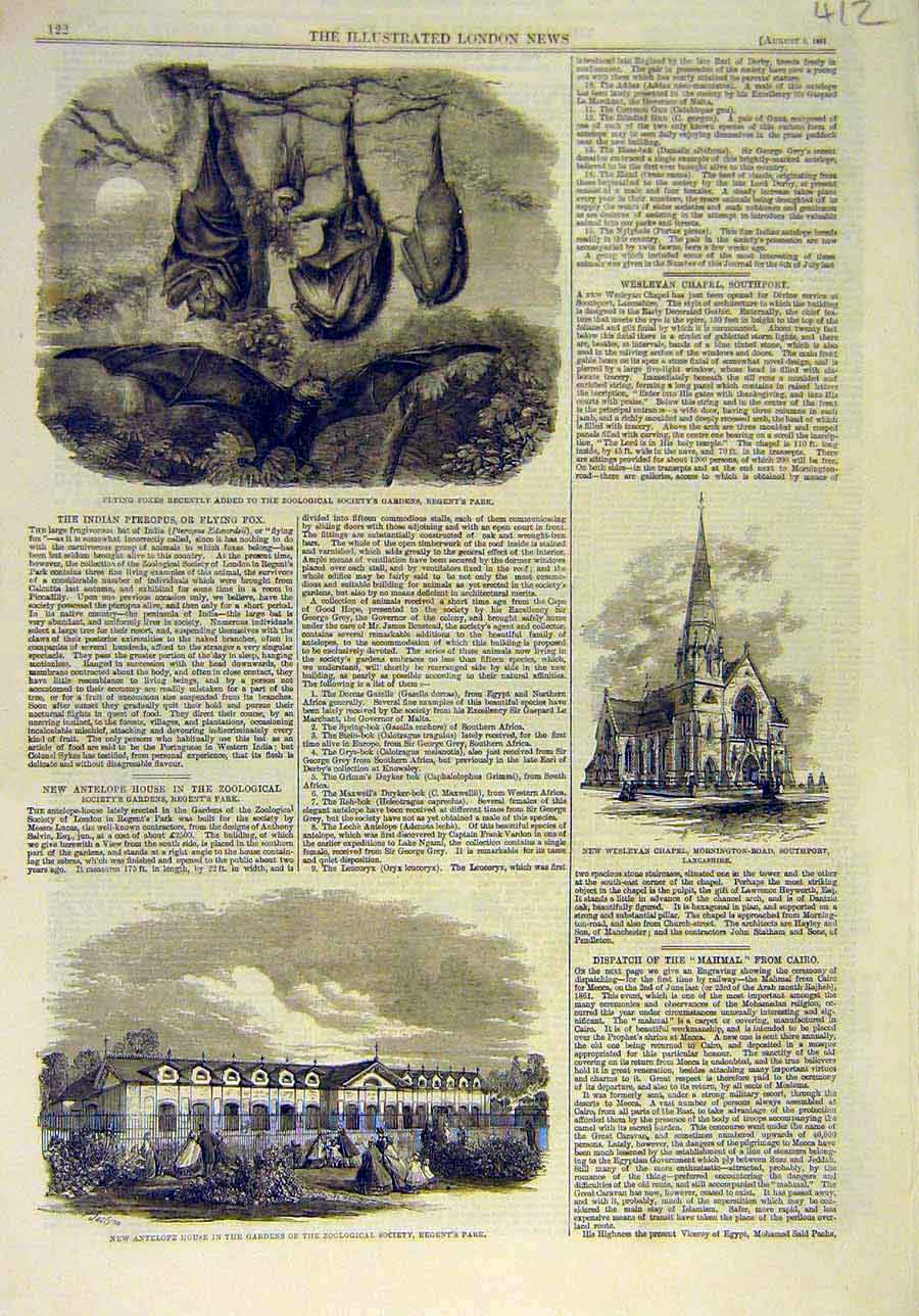 Print 1861 Flying-Foxes Zoo Antelope House Regent'S Park L 128011 Old Original