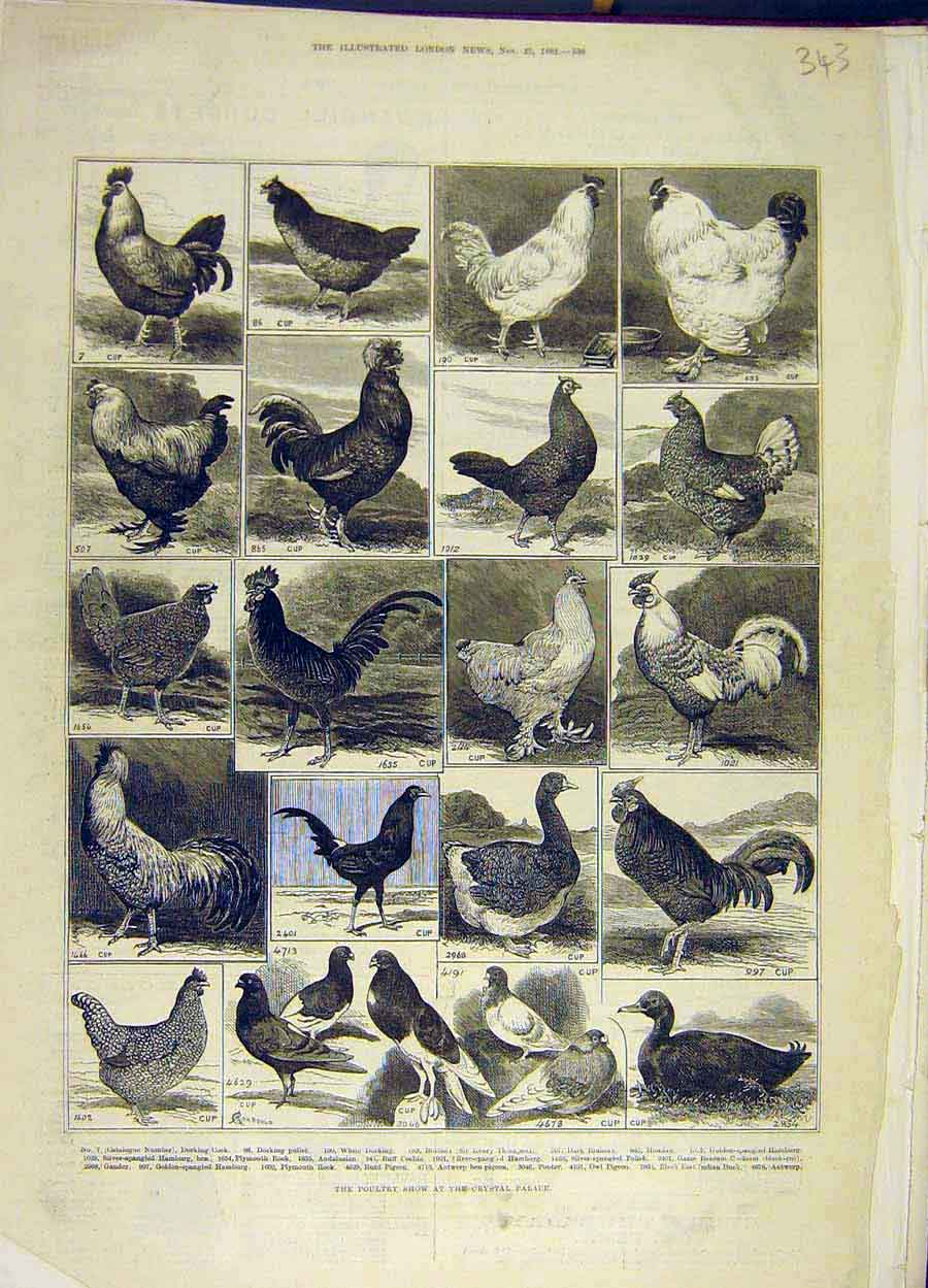 Print 1882 Poultry Show Crystal Palace Birds 438051 Old Original