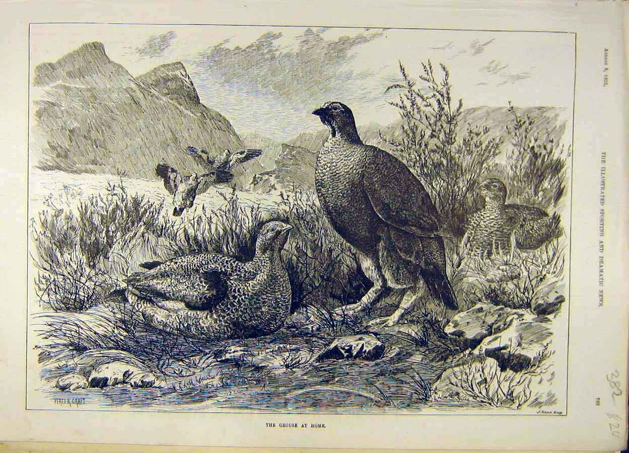 Print 1891 Grouse Home Game-Bird Sketch 828051 Old Original