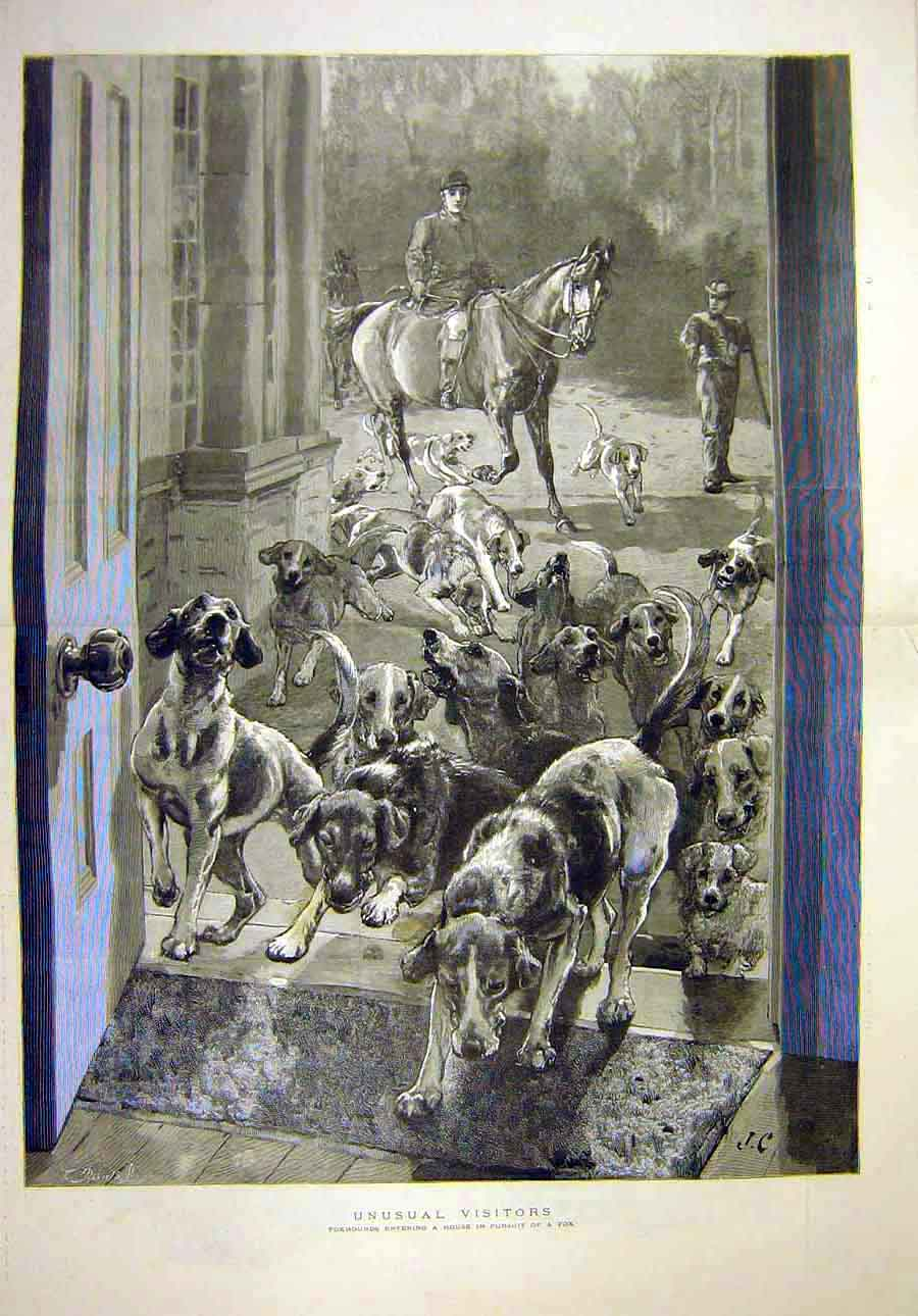 [Print 1887 Foxhounds House Pursuit Visitors Dogs Animal Hunt 48T8071 Old Original]