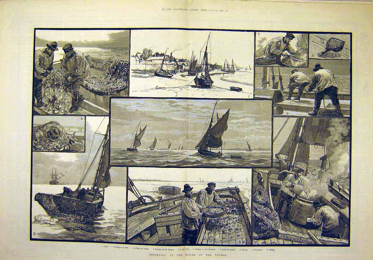 Print 1883 Shrimping Thames River-Mouth Fishing 81T8071 Old Original