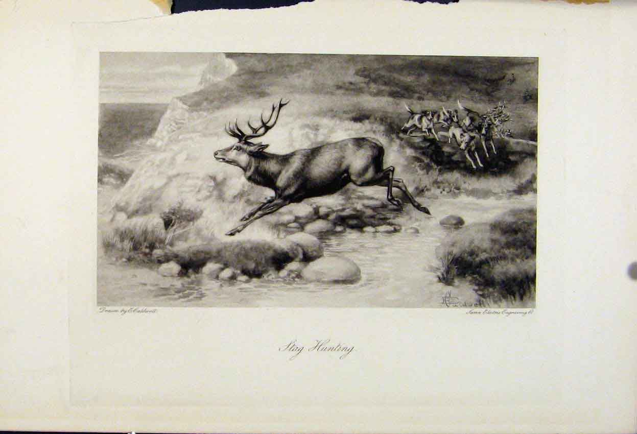 [Print Stag Hunting C1898 The Encyclopedia Sport 388241 Old Original]
