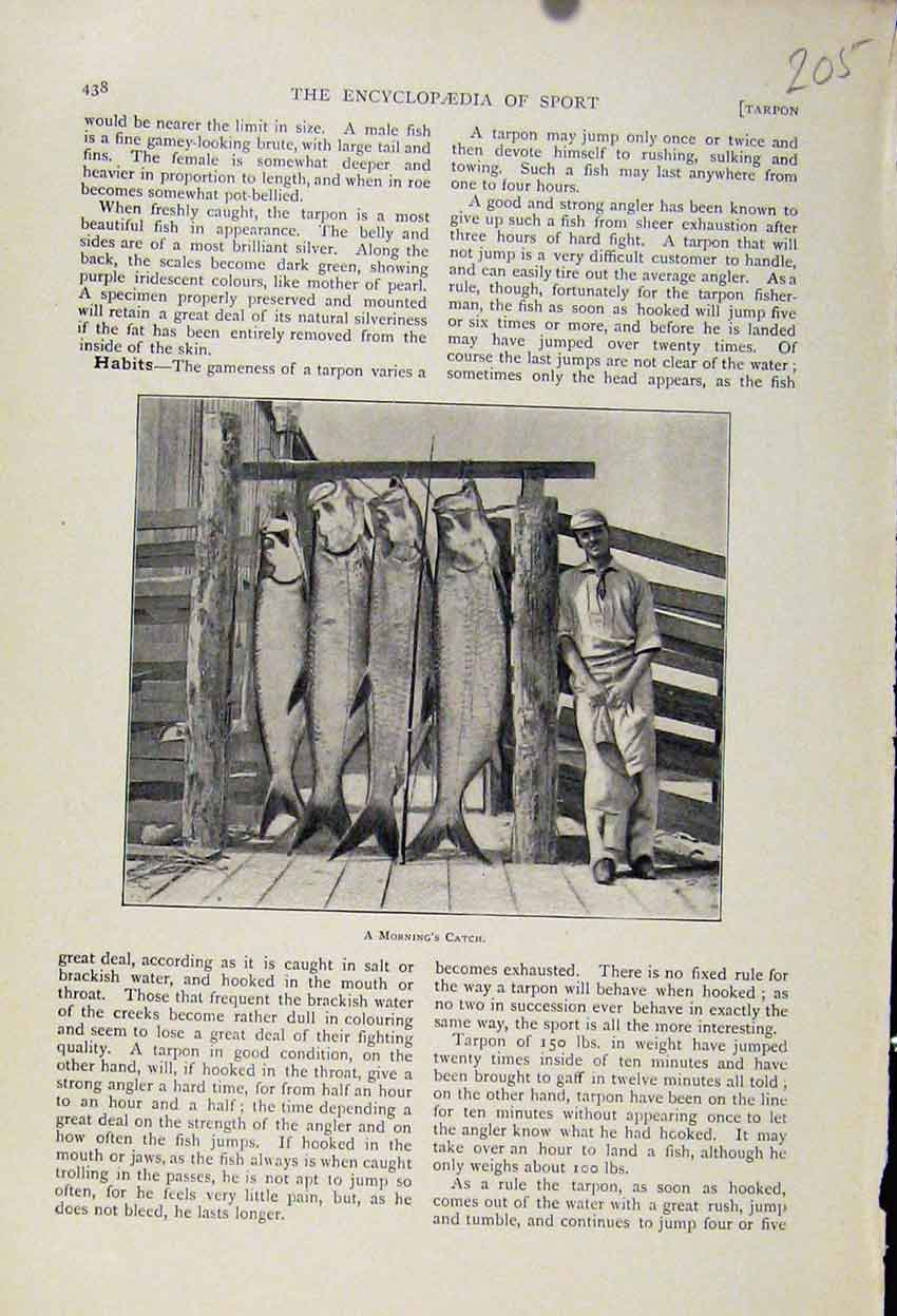 Print The Encyclopedia Sport Mornings Catch C1898 058241 Old Original