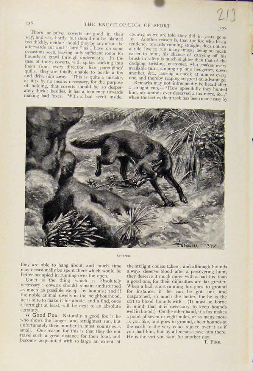 Print Wolf Stopped C1898 The Encyclopedia Sport 138241 Old Original