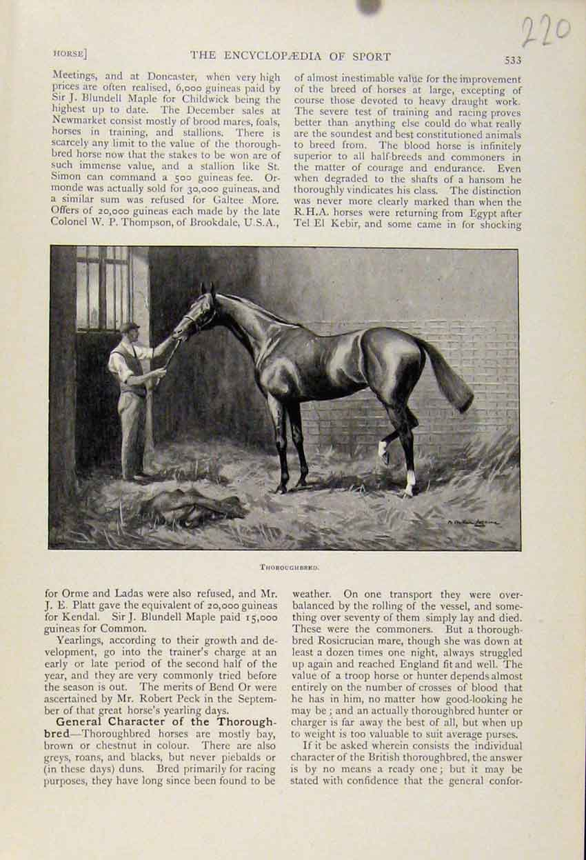 Print Thoroughbred Horse The Encyclopedia Sport 208241 Old Original