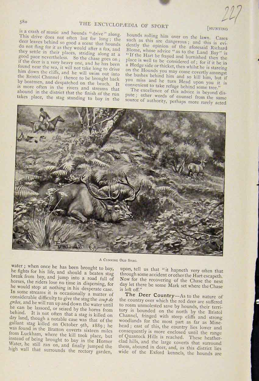 Print Hiding Cunning Stag The Encyclopedia Sport C1898 278241 Old Original